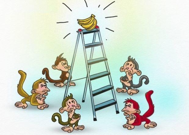 5 con khỉ và 1 nải chuối
