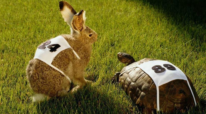 Câu Chuyện Rùa Và Thỏ
