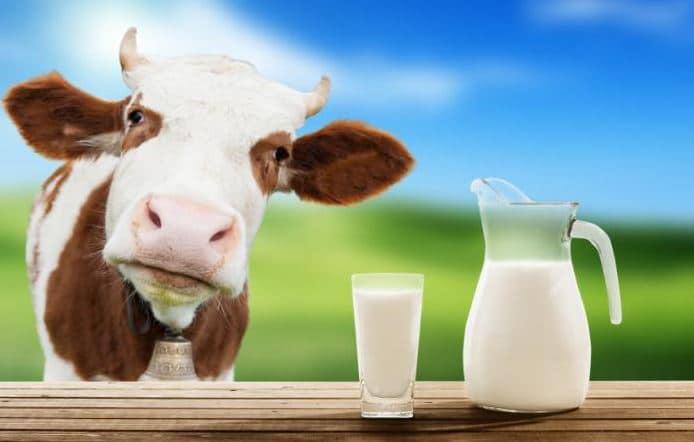 học thuyết con bò