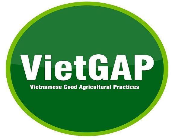 VietGAP là gì? GlobalGAP là gì? Kiến thức tổng hợp về VietGap
